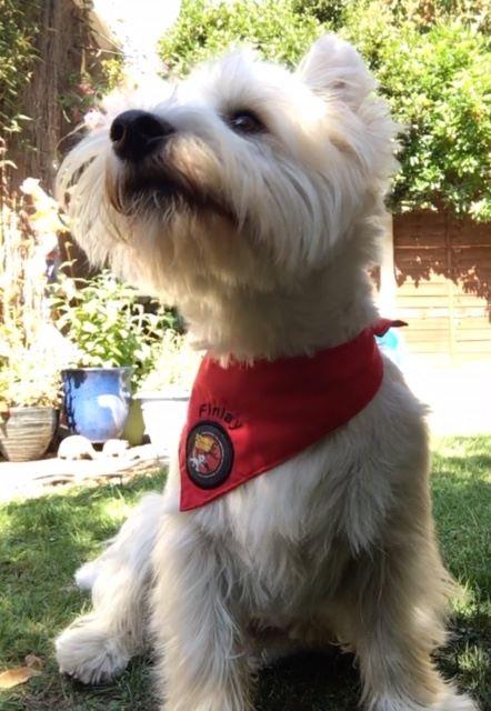Finlay zombie squad dog bandana