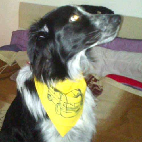 boo in his custom t4 bandana