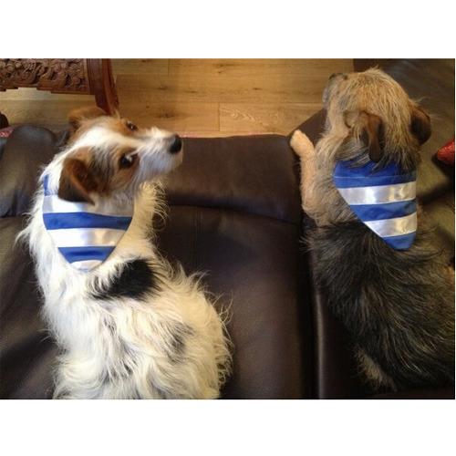 puppy boys