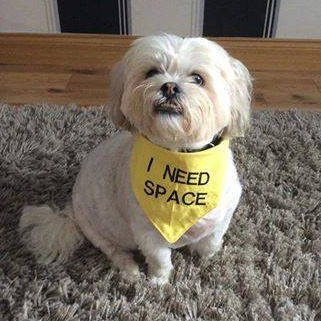 charlie i need space bandana