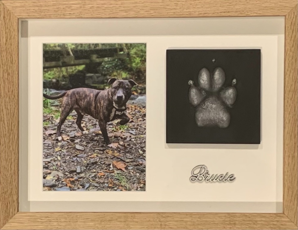 Single Pet Paw with a 7x5 photo Medium-Large Dogs