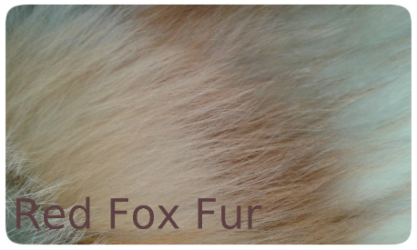 20141016_133827 red fox fur