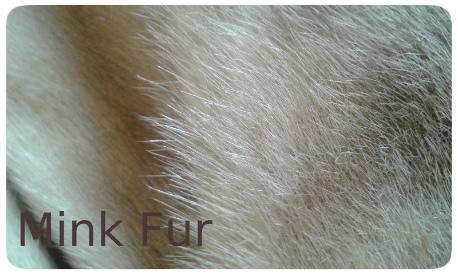 20141016_133956 blonde mink