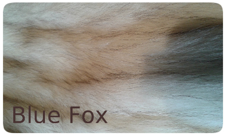 20141016_134019 blue fox