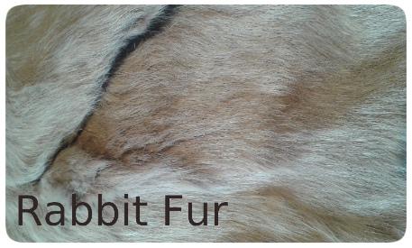 20141016_134418 rabbit