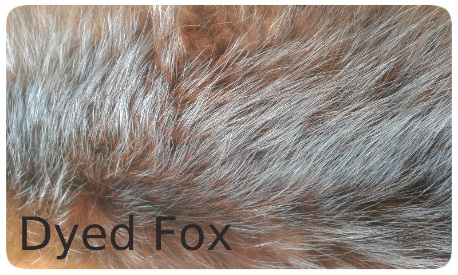 20141017_122826 dyed fox