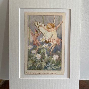 Mounted Print - The Wood Anemone Fairy