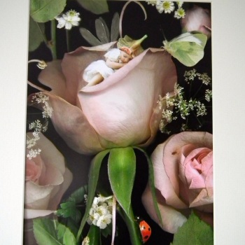 Fairy Print - Night Falls in the Secret Garden
