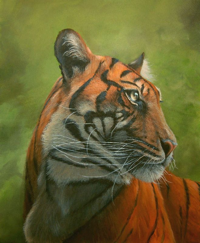 Sumatran Tiger 24 x 20 inch acrylic on canvascanvas