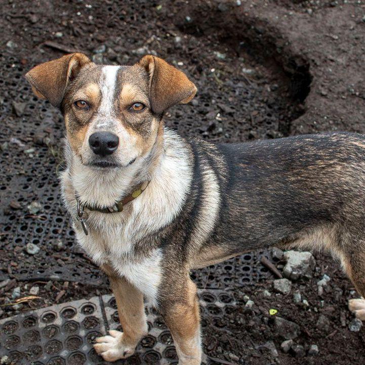 Archie (10)