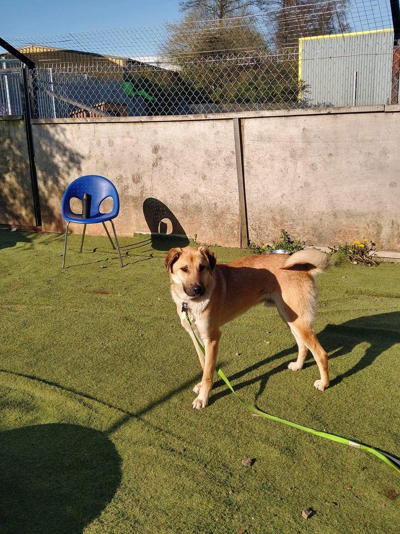 Hector (2)