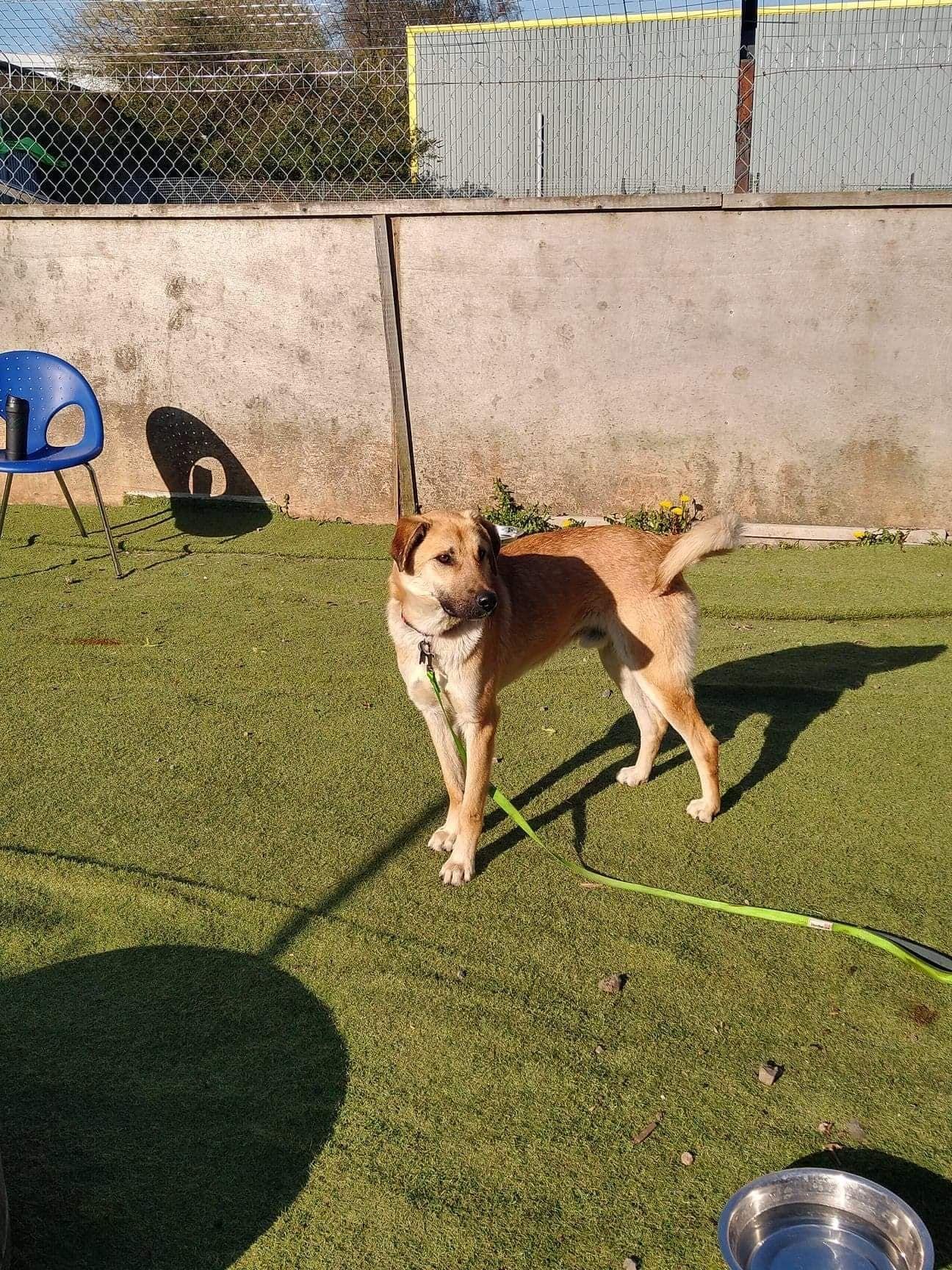 Hector (4)