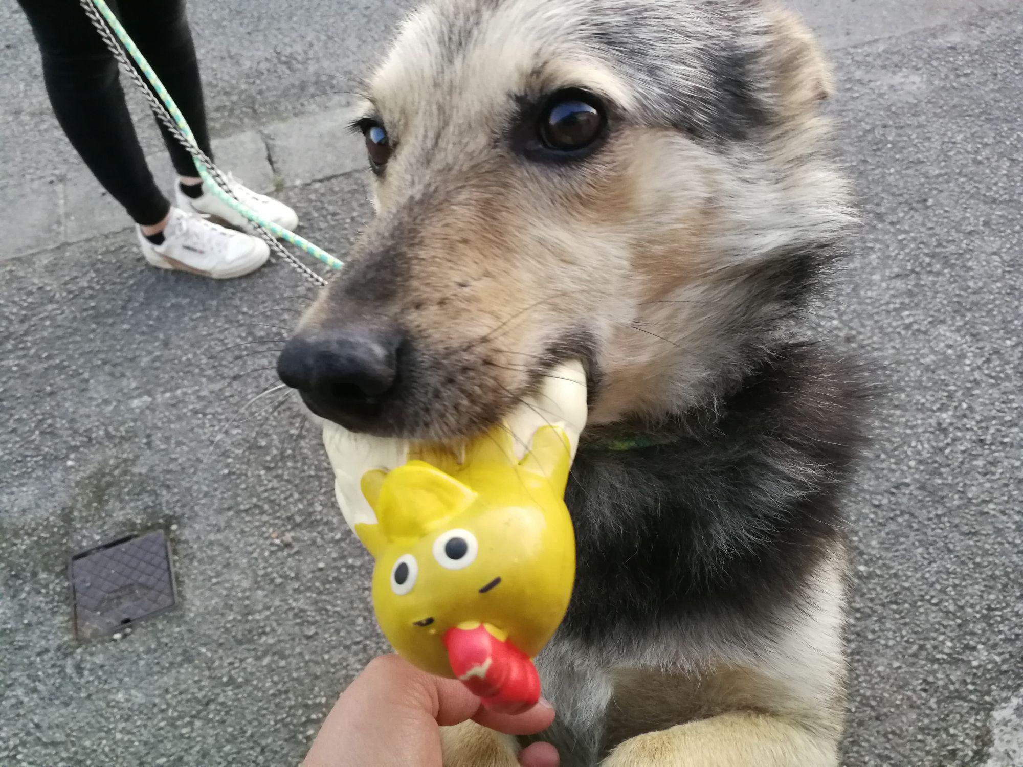 Bert (9).jpg