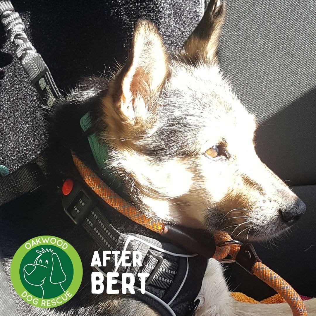 After bert.jpg