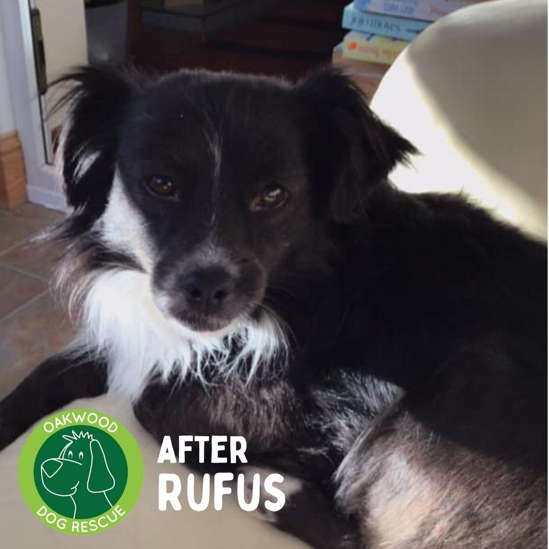 After rufus.jpg