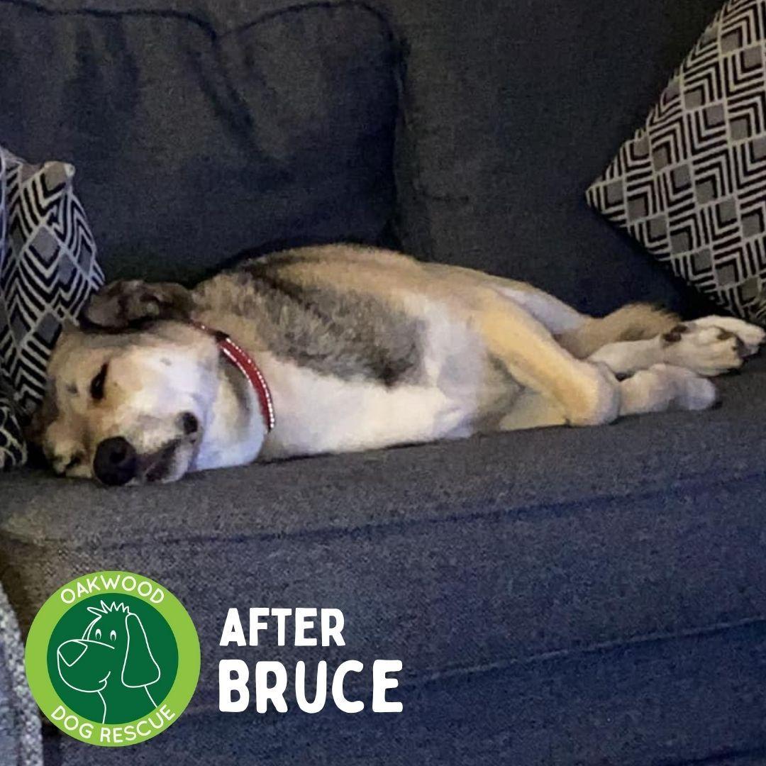 After Bruce.jpg
