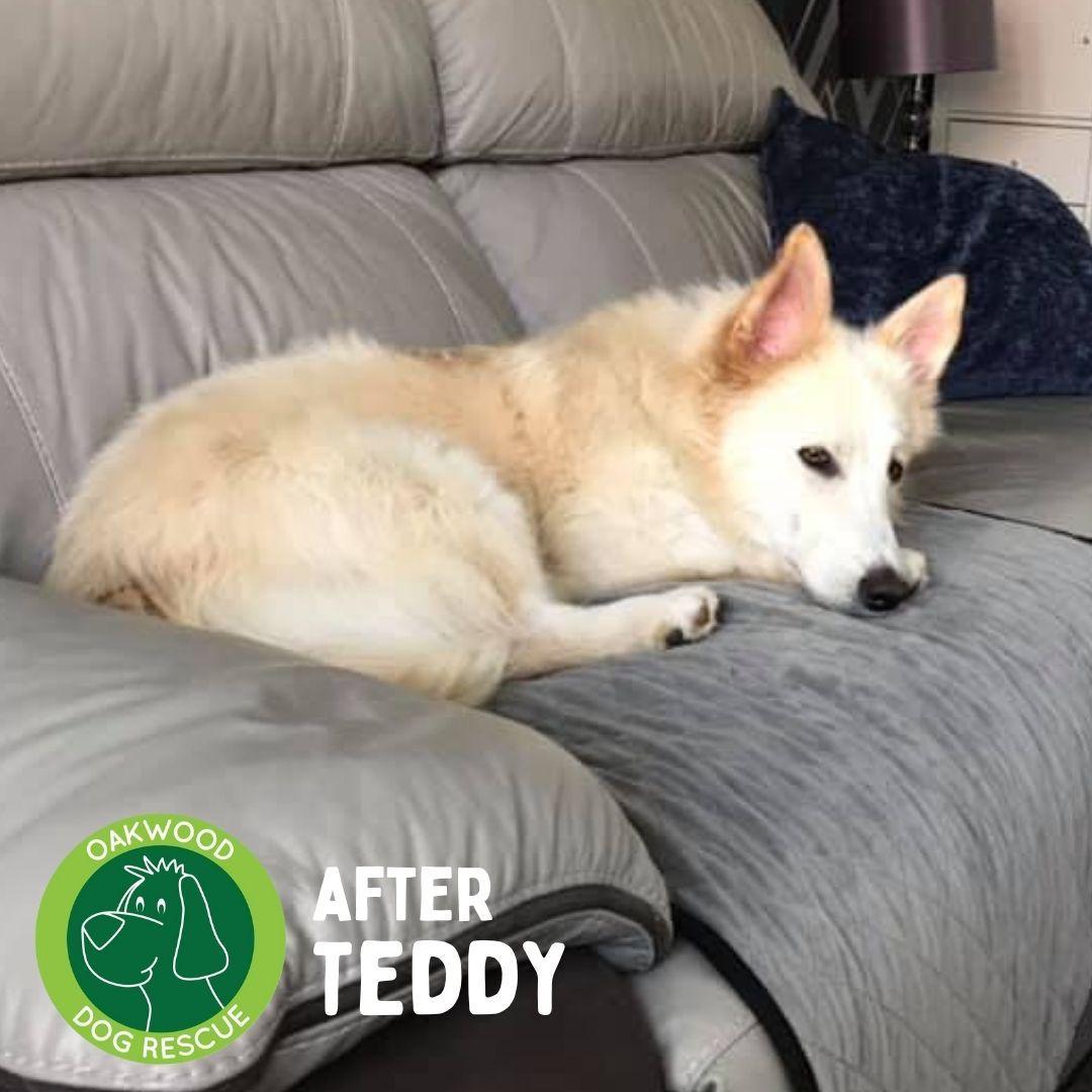After Teddy.jpg