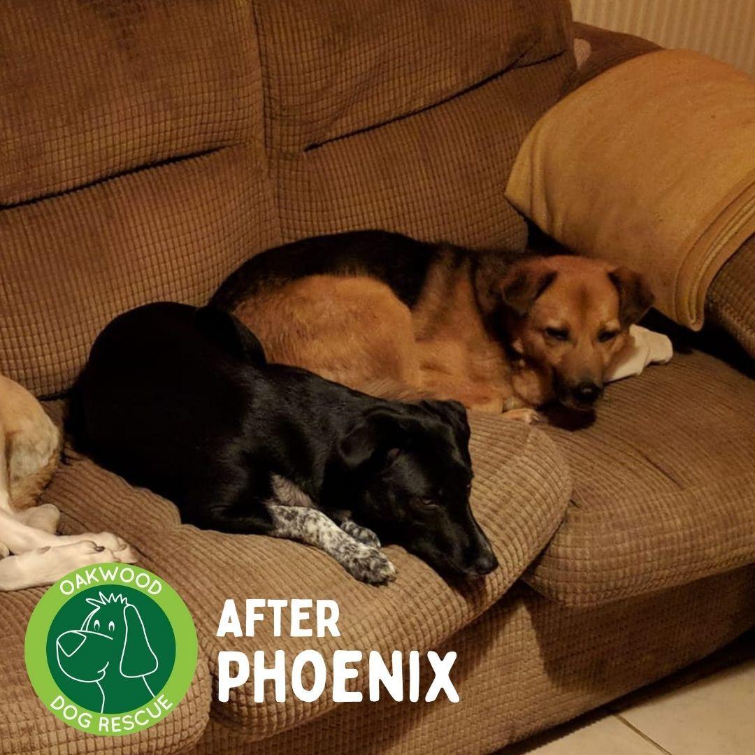After phoenix.jpg
