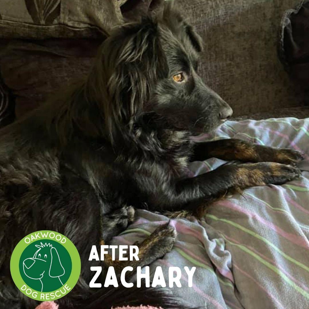 After Zachary.jpg