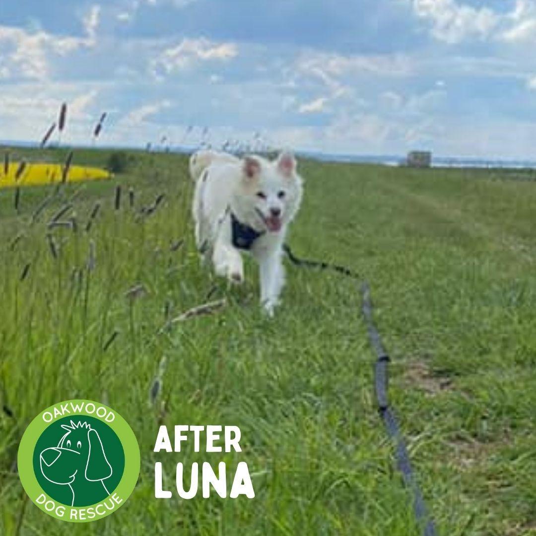 After Luna.jpg