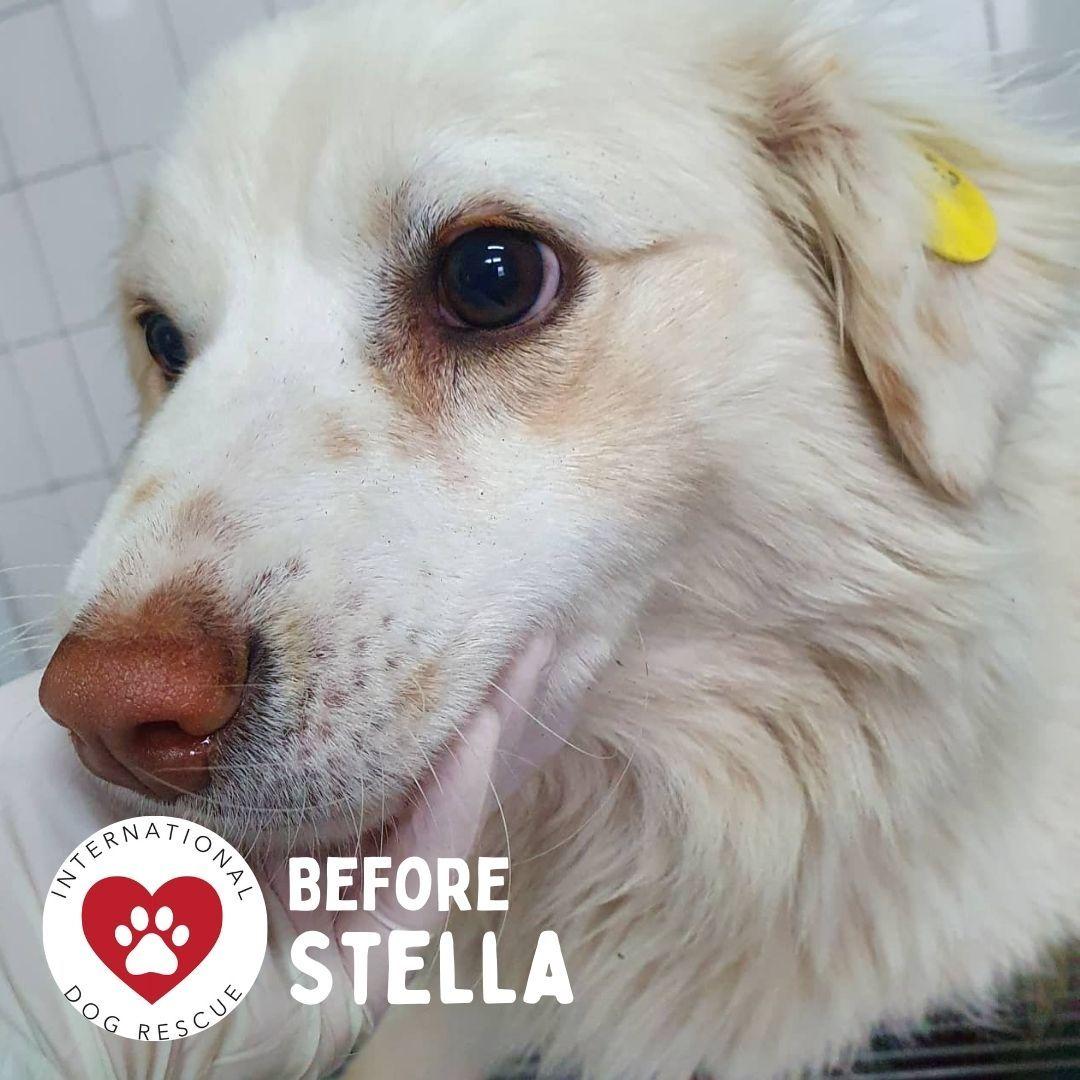 Before Stella.jpg