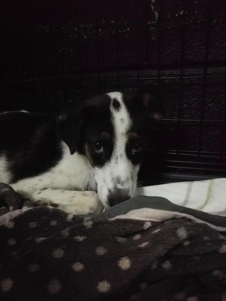Elsie (5)