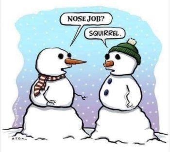 nose job squirrel