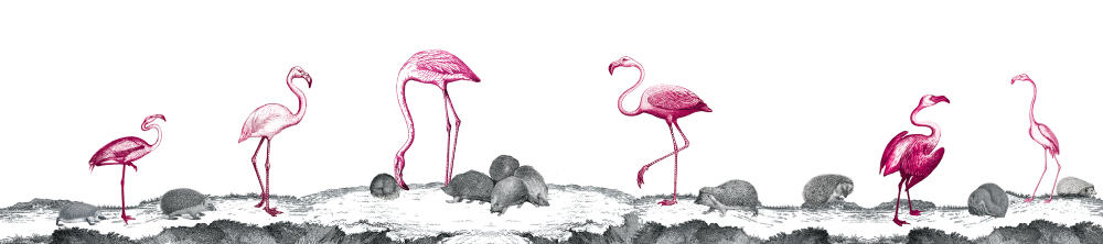 Flamingos and Hedgehogs
