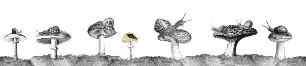 snails long