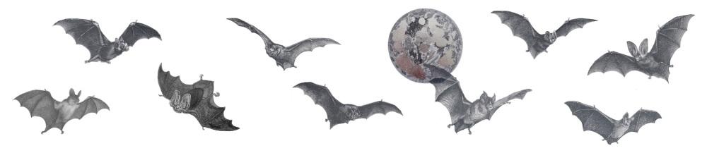 Bats full