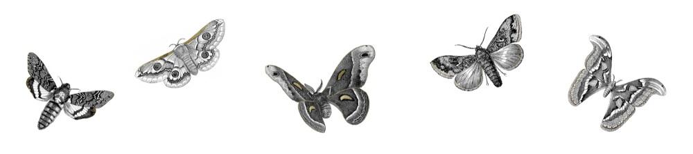 Moths full copy