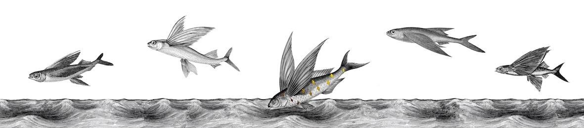 flying fish full copy