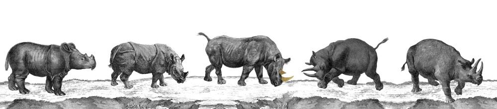 Rhino full 2