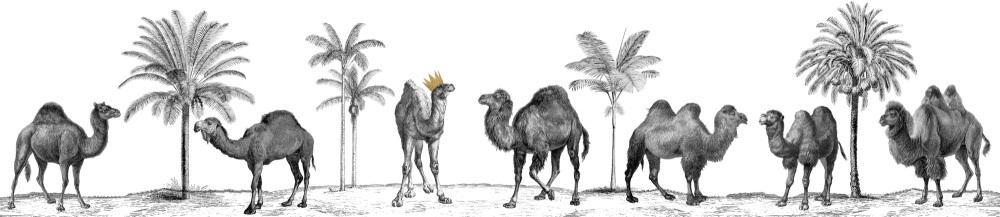Camels full copy