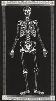 Timeless Treasures - Glow in the Dark Skeleton Panel - Black