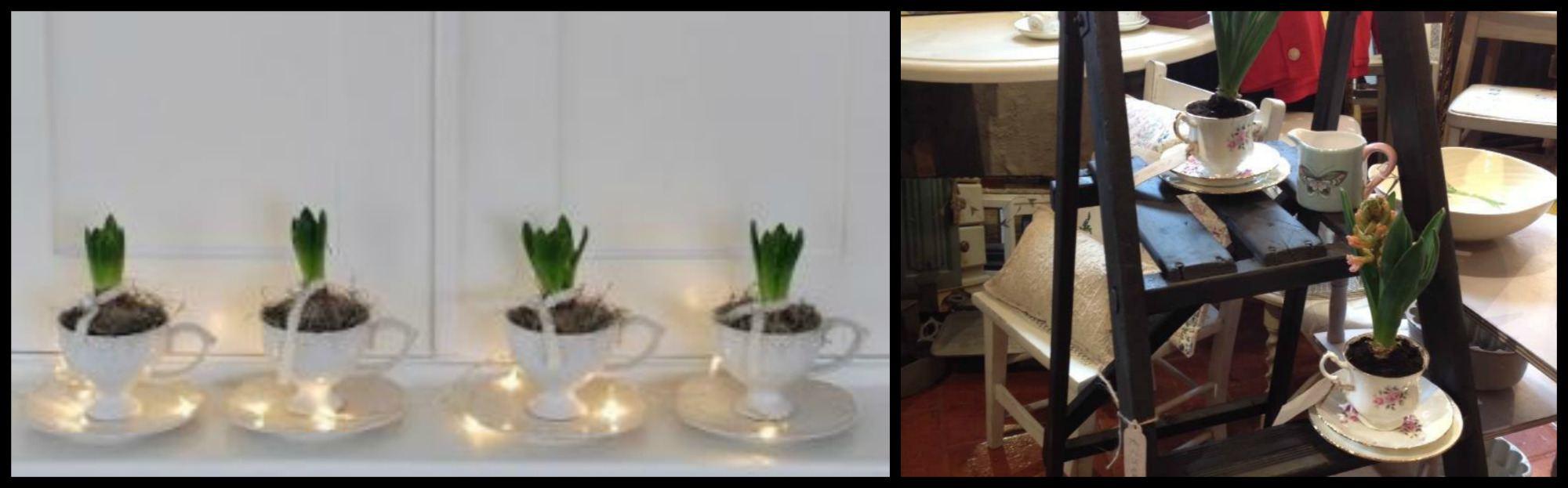 bulbs in teacups