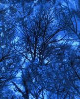 Timeless Treasures Fabric - Electric Nature Trees - Blue - 100% Cotton - 1/4m+