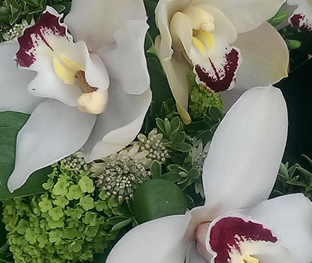 Orchids, Verburnum, sympathy, funeral