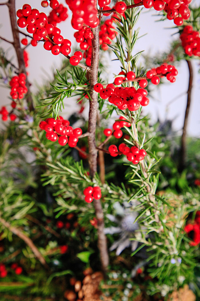 Christmas display with rosemary