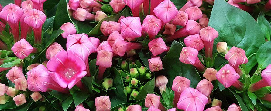 Spring flowers, Tulips and Iris's