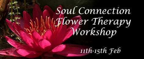 Soul Connection Flower Therapy Workshop - week 1 - 11th -15th February