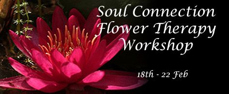 SOUL CONNECTION FLOWER THERAPY WORKSHOP 2 - 18th - 22nd FEBRUARY