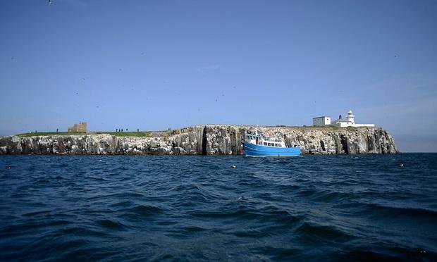 farne islands 2