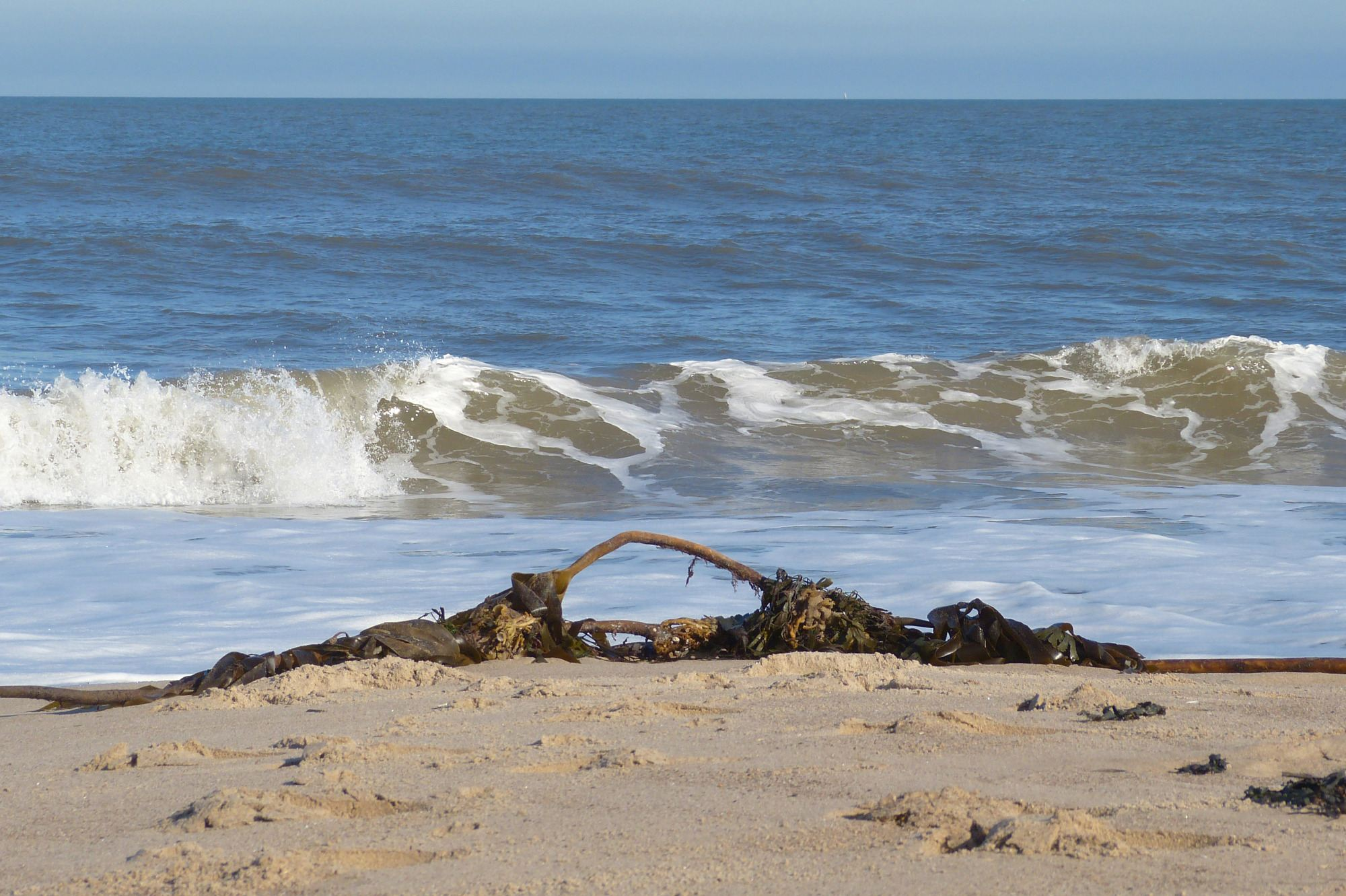 the strandline warkworth beach 1