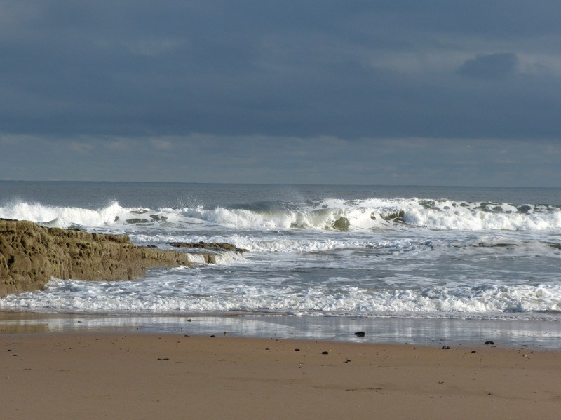warkworth beach northumberland the strandline
