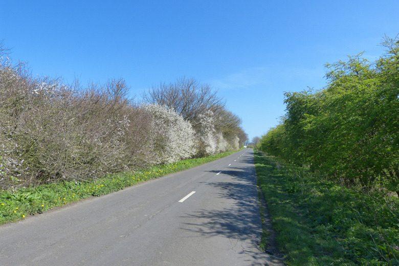 beach road warkworth blog