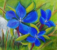 Gentian, The Burren a