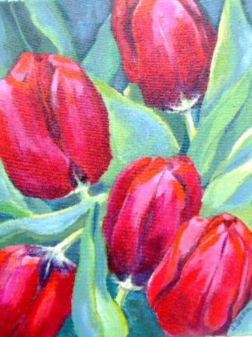 Tulip Code F.17