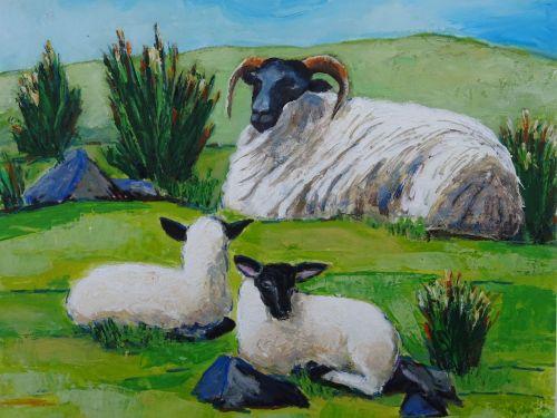 Irish Blackface Mountain Sheep and lambs - Code: L.31
