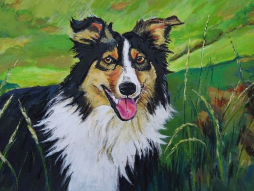 Irish Sheepdog - Code: L.33